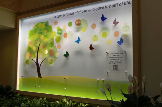 The Tree Of Life at The Albany Medical Center